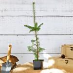 drzewko w drewnianej skrzynce na upominek z personalizacją