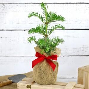 drzewko jodły na prezent dla pary młodej